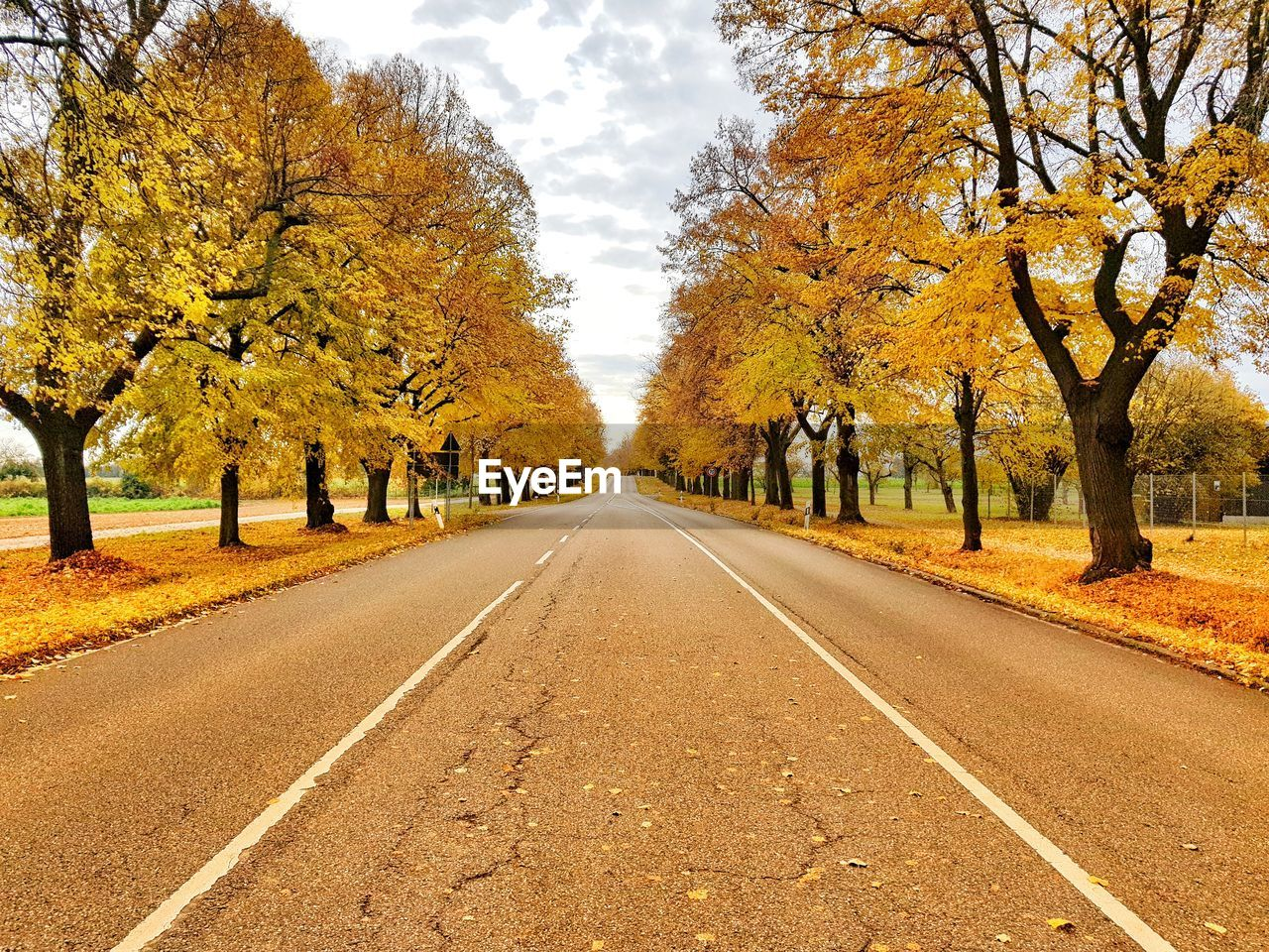 tree, autumn, change, the way forward, plant, direction, road, diminishing perspective, beauty in nature, nature, transportation, day, road marking, marking, growth, vanishing point, tranquility, symbol, treelined, outdoors, no people, autumn collection, long, fall, dividing line