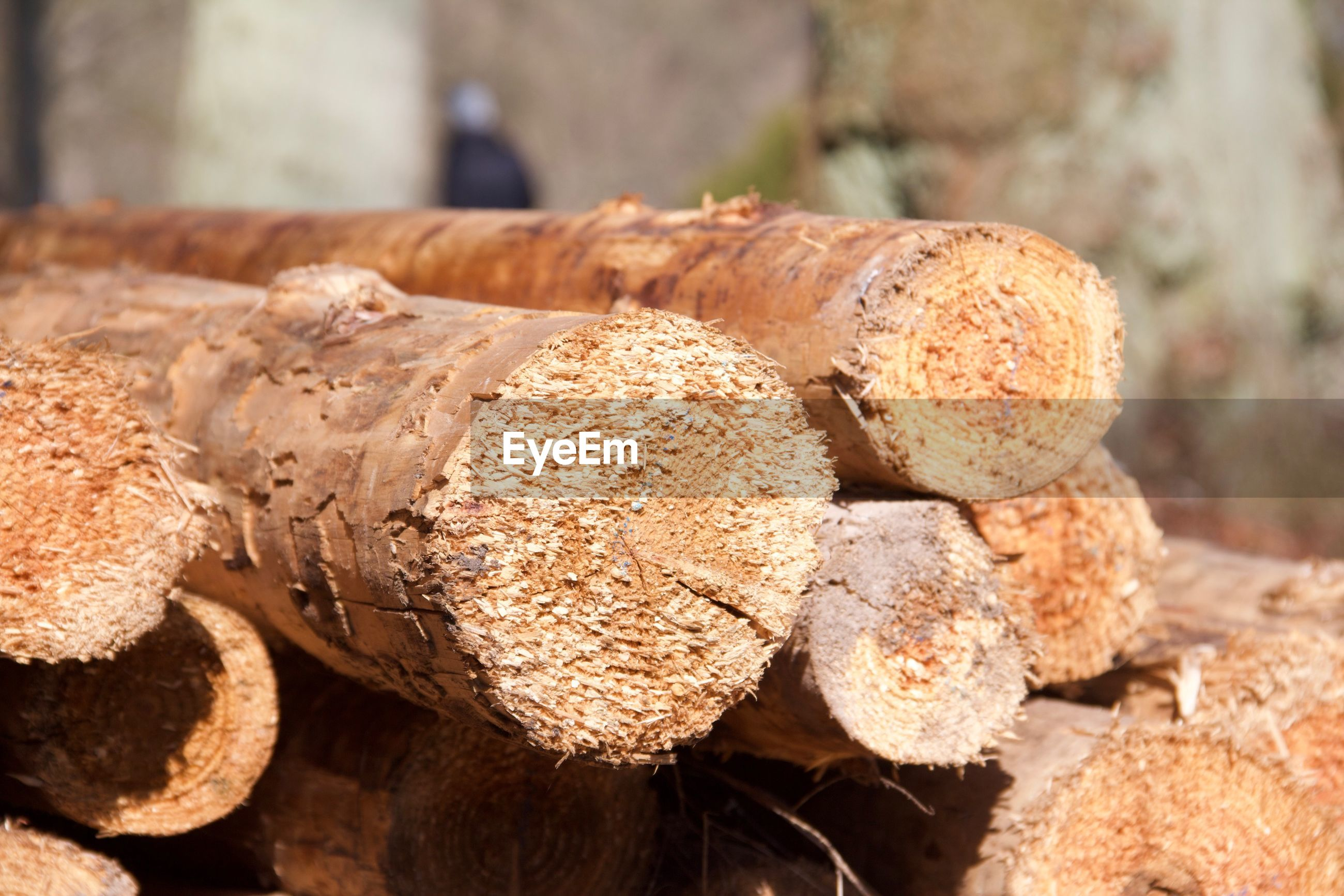 Stack of logs outdoors