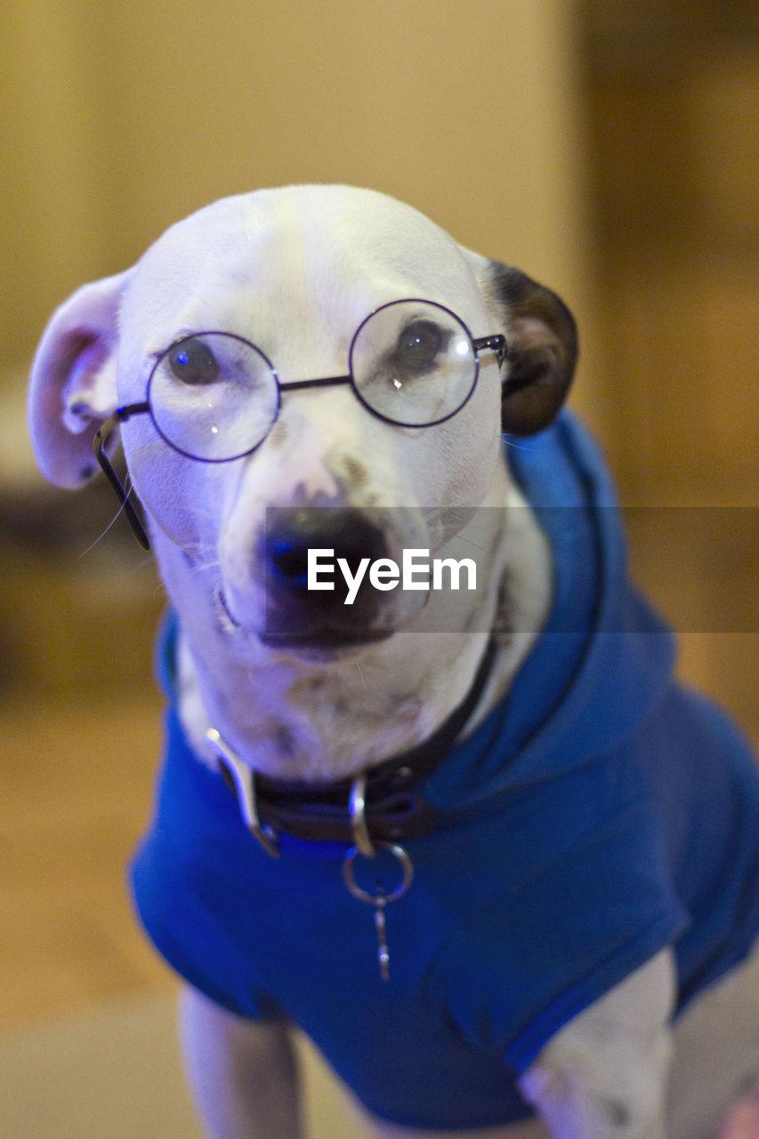 CLOSE-UP PORTRAIT OF A DOG WEARING SUNGLASSES