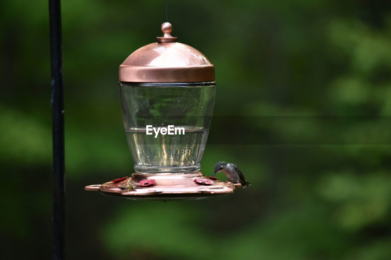 Hummingbird On Bird Feeder