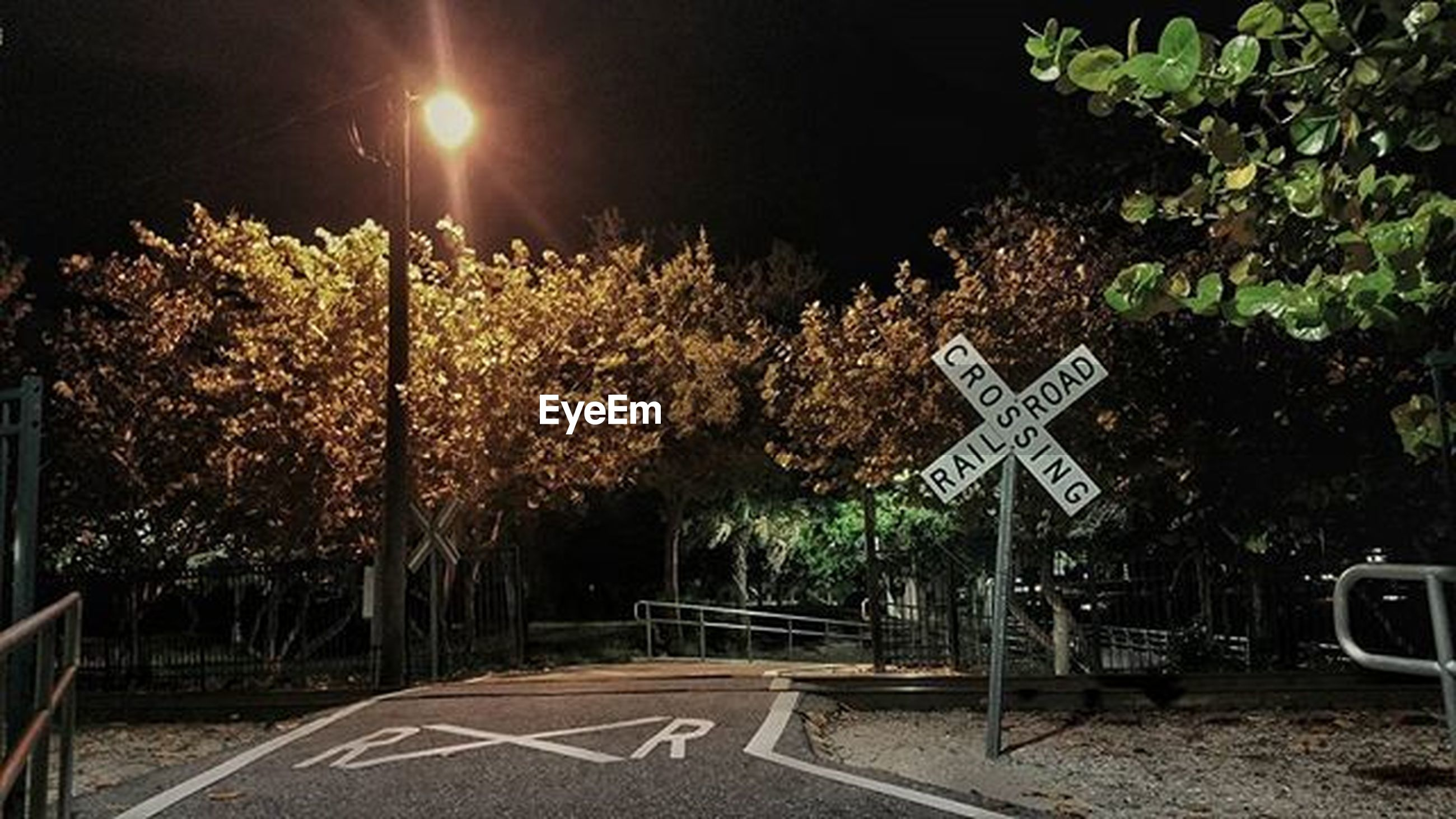text, tree, communication, plant, night, western script, growth, information sign, illuminated, street light, road sign, transportation, sign, lighting equipment, guidance, road, outdoors, street, no people, nature