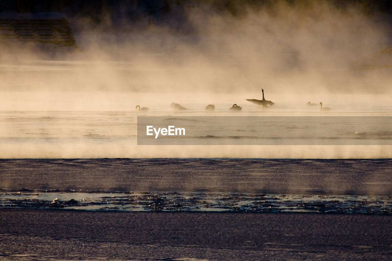 Silhouette Birds Swimming River In Foggy Weather