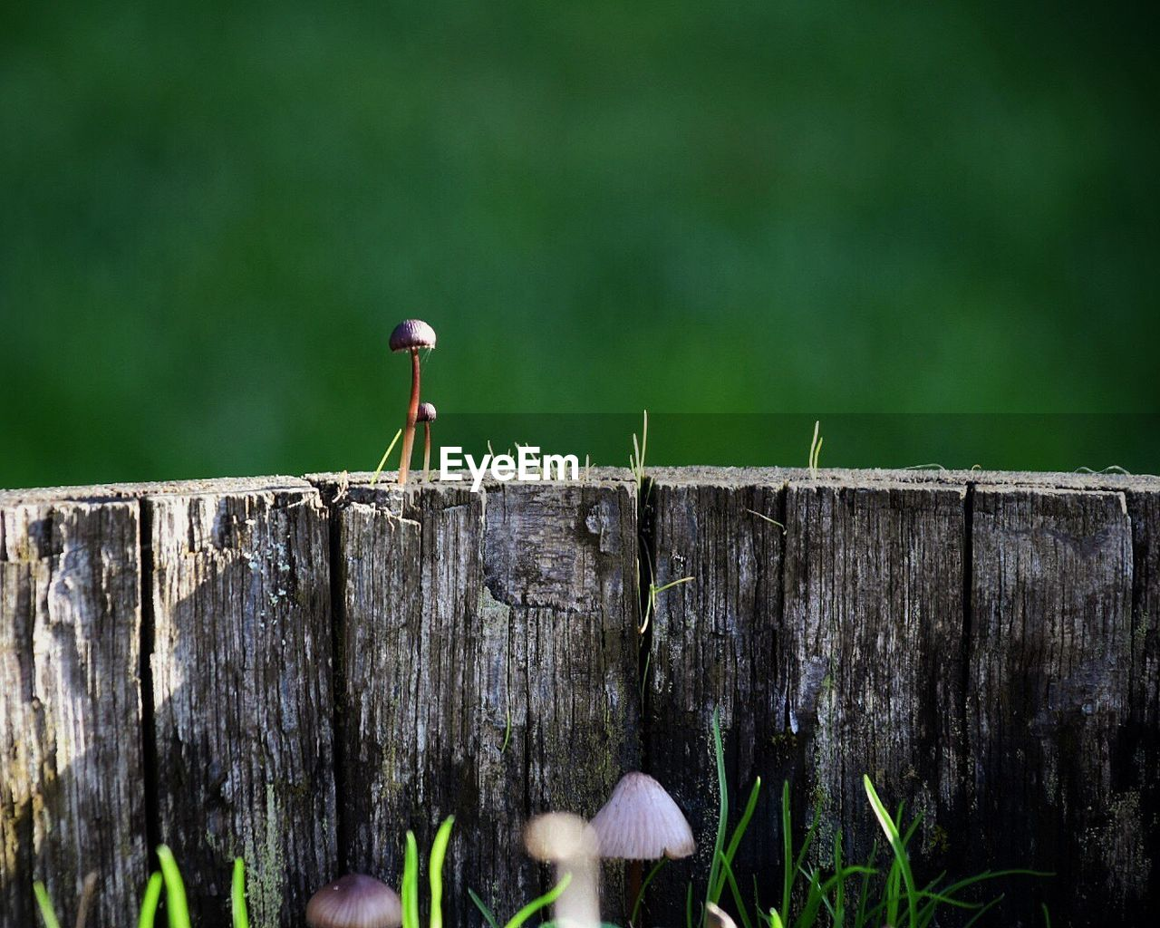 wood - material, day, nature, no people, outdoors, focus on foreground, tree stump, plant, fence, boundary, bark, barrier, post, one animal, tree, perching, wooden post, close-up, animal wildlife, selective focus, small
