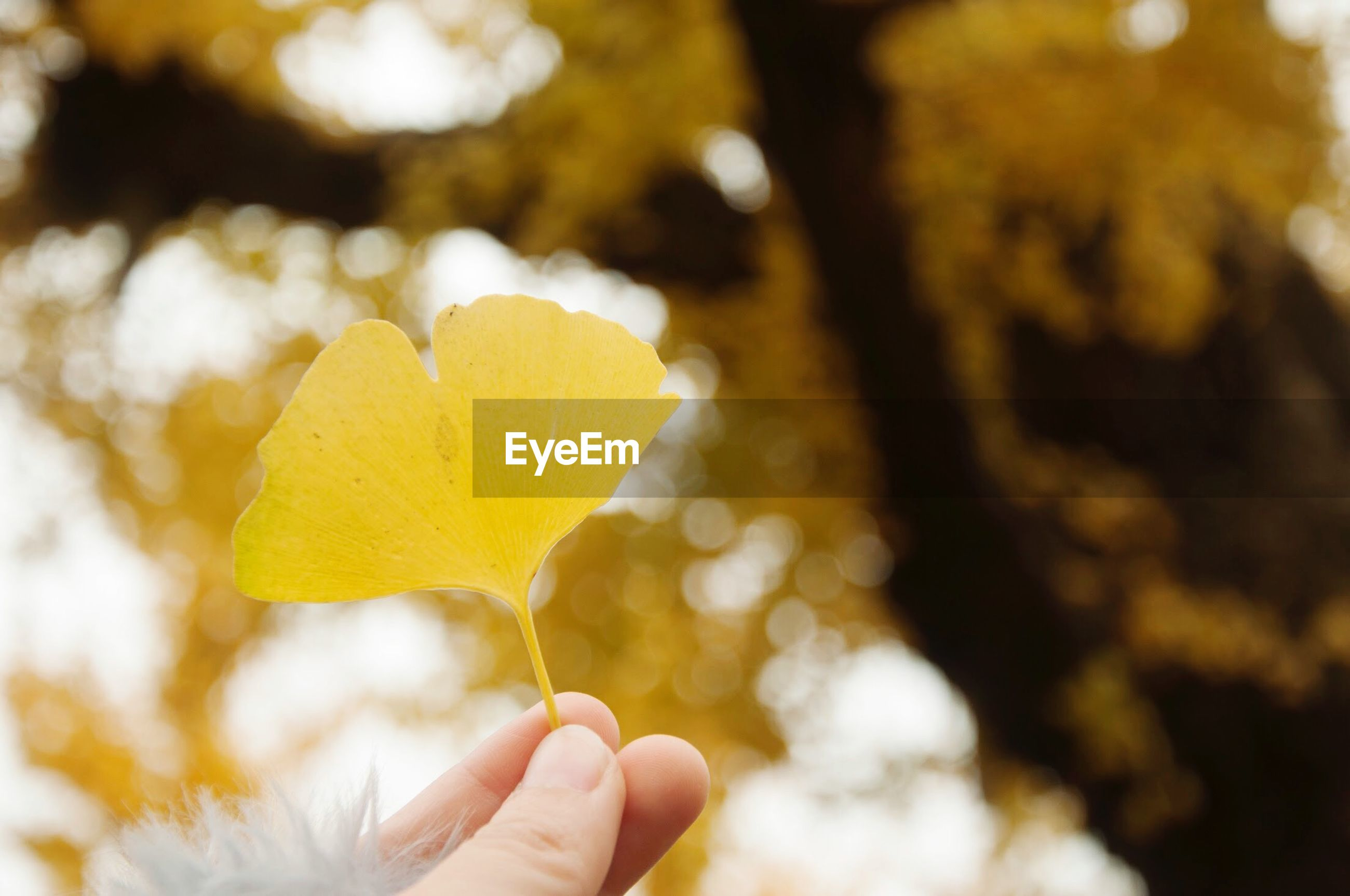 Close-up of person holding yellow flower against trees