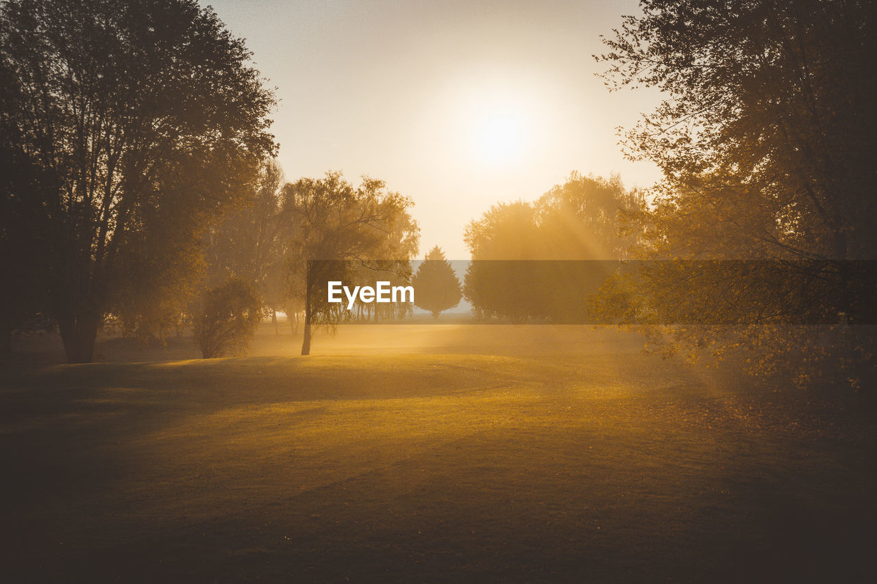 tree, plant, beauty in nature, tranquility, sunlight, tranquil scene, sun, scenics - nature, sky, nature, no people, growth, land, environment, lens flare, sunbeam, non-urban scene, idyllic, sunset, landscape, outdoors, streaming, hazy