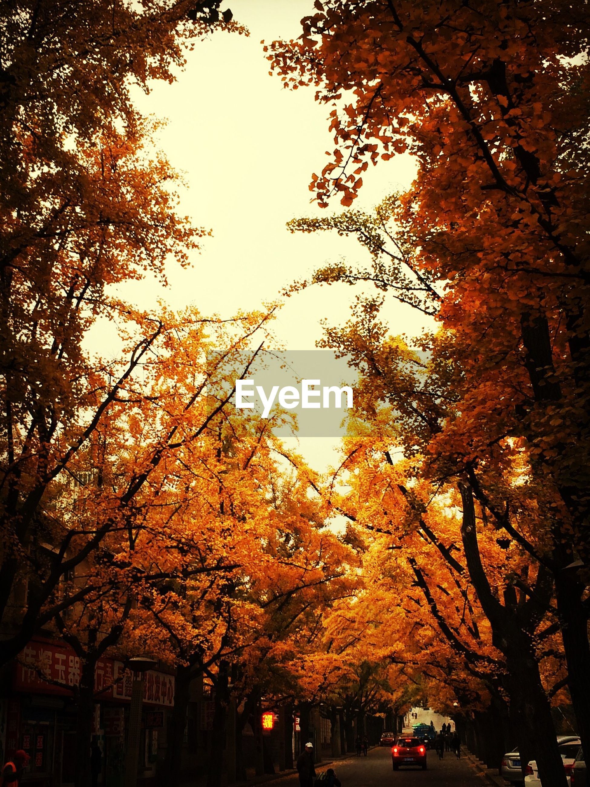 Low angle view of autumn trees over street in city