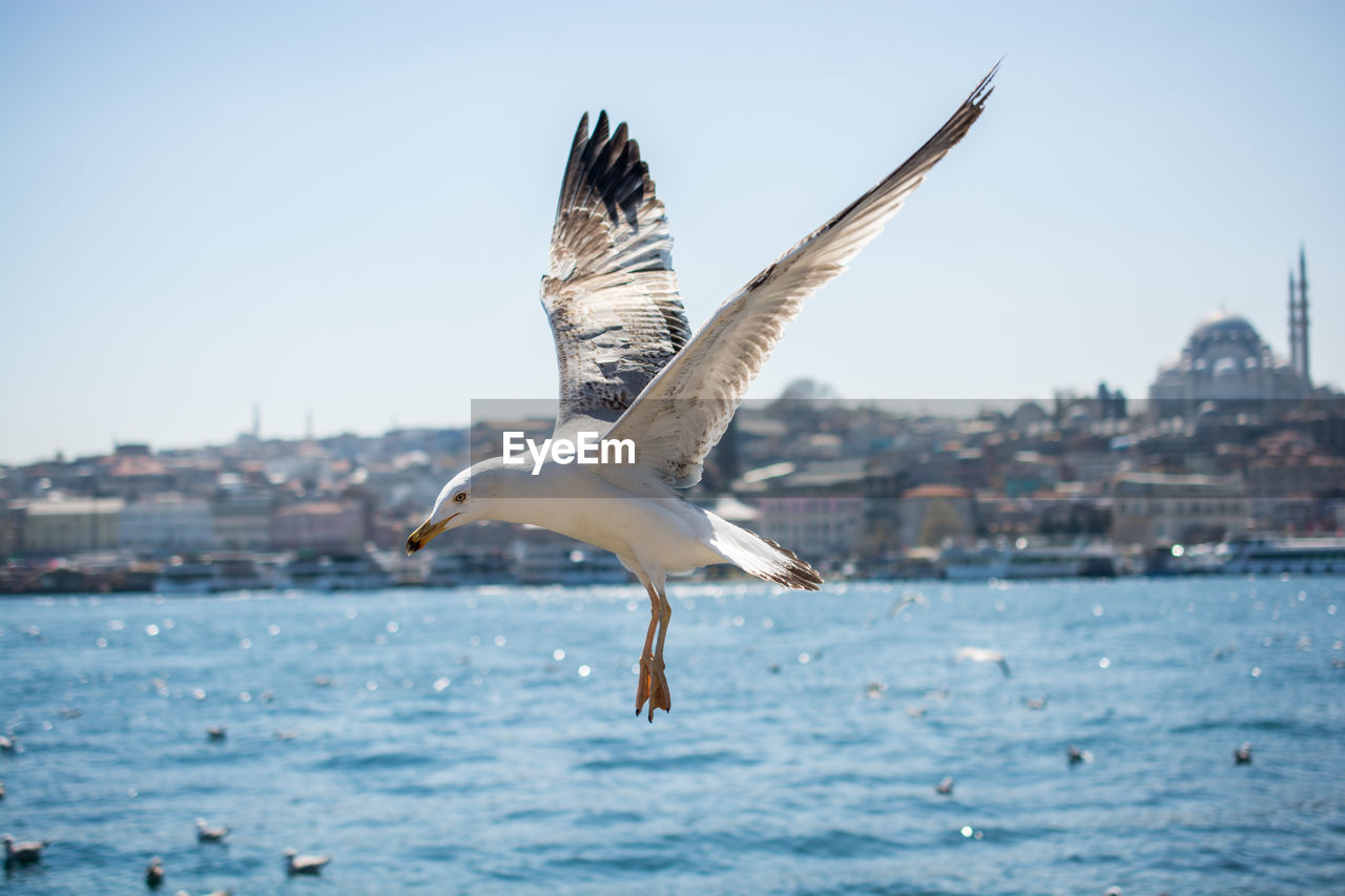 flying, animals in the wild, animal themes, animal wildlife, animal, spread wings, water, vertebrate, bird, one animal, clear sky, sky, seagull, sea, nature, mid-air, no people, day, architecture, outdoors, animal wing