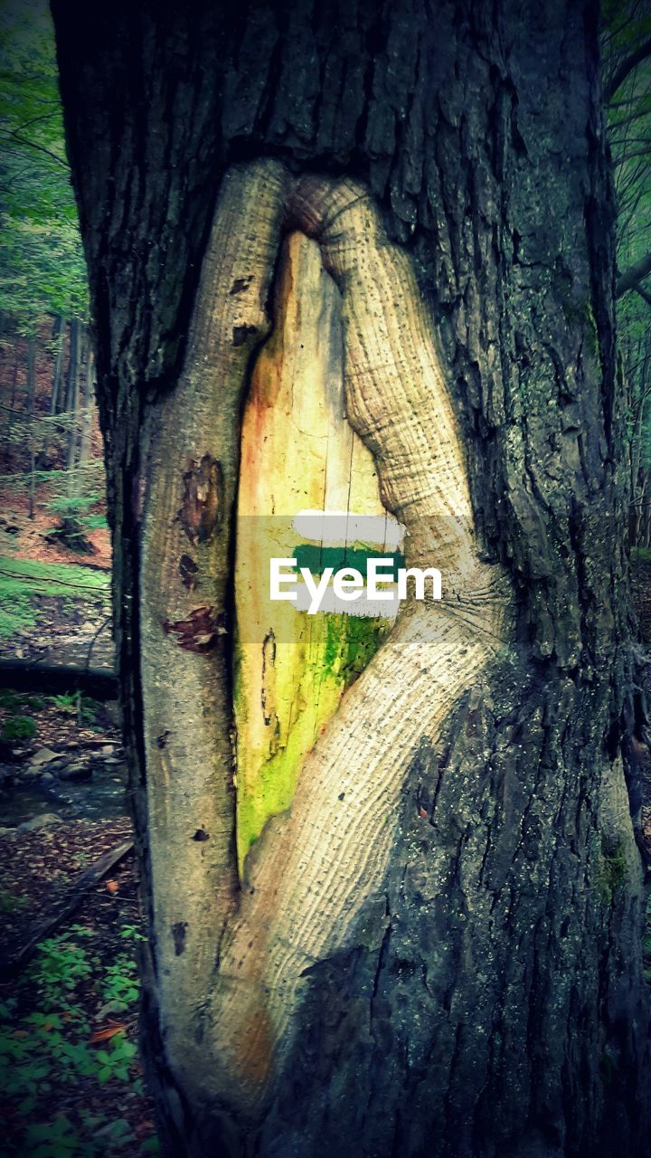 tree trunk, tree, no people, wood - material, day, textured, outdoors, close-up, marking, nature