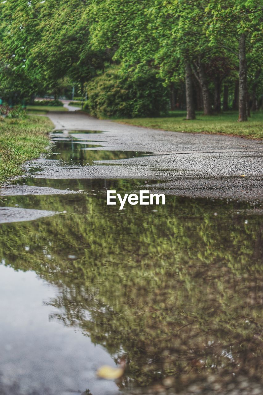 water, plant, tree, nature, reflection, lake, growth, day, no people, green color, waterfront, tranquility, outdoors, park, beauty in nature, tranquil scene, park - man made space, selective focus, built structure