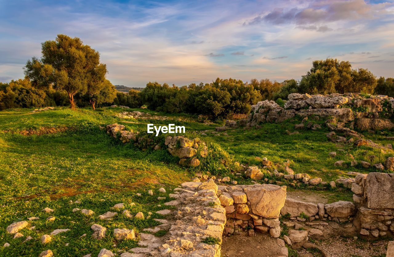 plant, tree, sky, nature, cloud - sky, tranquil scene, beauty in nature, environment, no people, tranquility, scenics - nature, landscape, green color, grass, history, architecture, non-urban scene, land, the past, growth, outdoors, stone wall, ancient civilization, archaeology