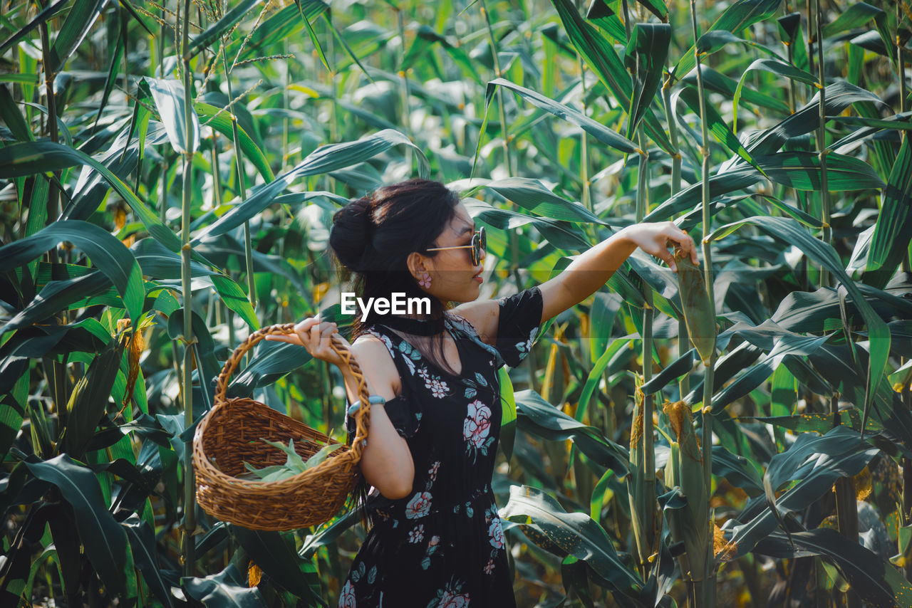 Full length of woman standing by plants in maize field.