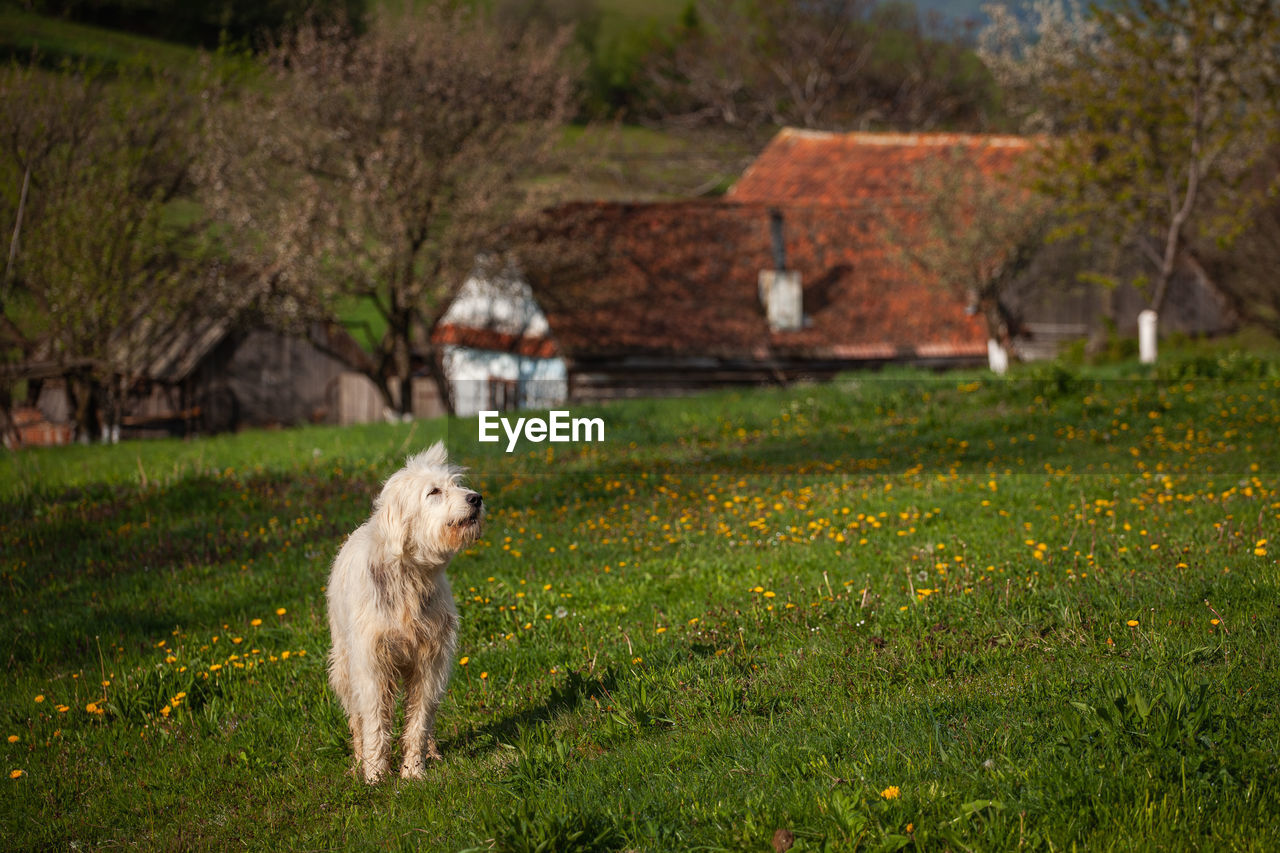 VIEW OF A DOG ON FIELD BY ROCK