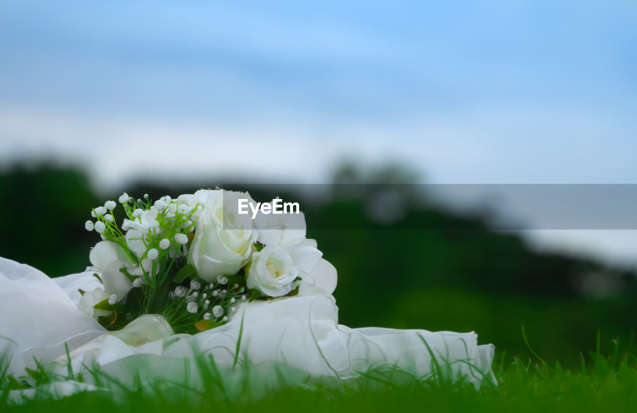 plant, flowering plant, flower, beauty in nature, nature, white color, freshness, close-up, day, vulnerability, fragility, flower head, selective focus, inflorescence, no people, petal, focus on foreground, growth, grass, outdoors, bouquet, flower arrangement