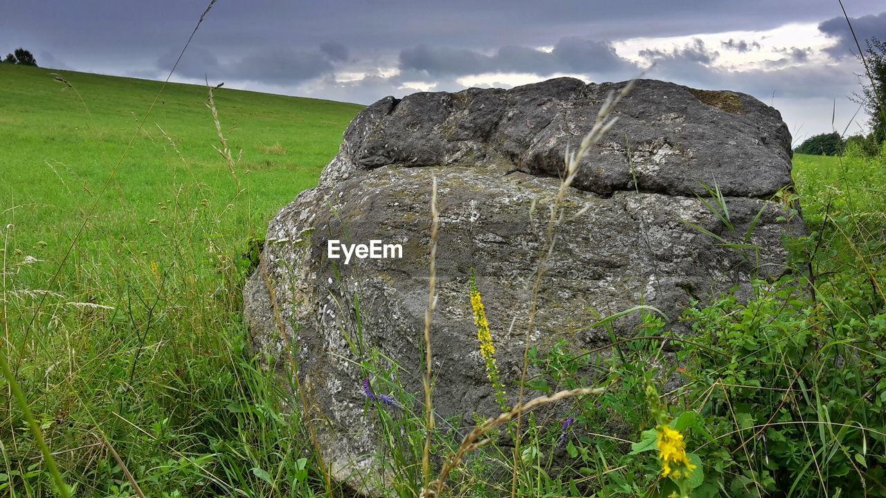 Rock In Field