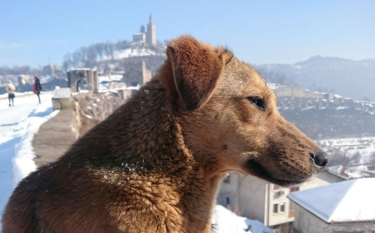 winter, one animal, snow, cold temperature, day, animal themes, architecture, focus on foreground, dog, outdoors, building exterior, built structure, mammal, no people, nature, domestic animals, close-up, pets, city, cityscape, sky