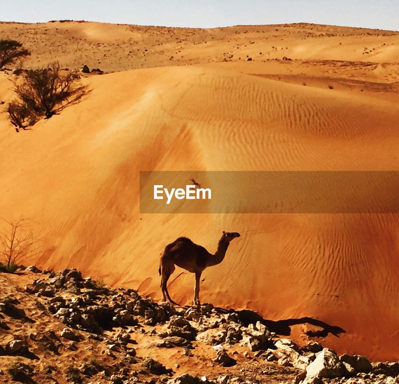 SCENIC VIEW OF DESERT AGAINST SUNSET