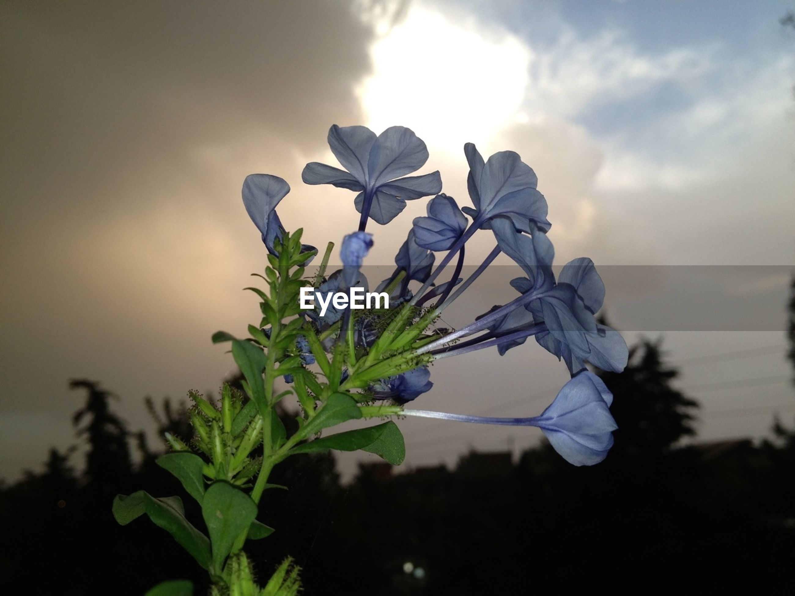 flower, growth, fragility, freshness, plant, petal, stem, sky, beauty in nature, leaf, nature, flower head, focus on foreground, close-up, blooming, bud, in bloom, cloud - sky, blossom, low angle view