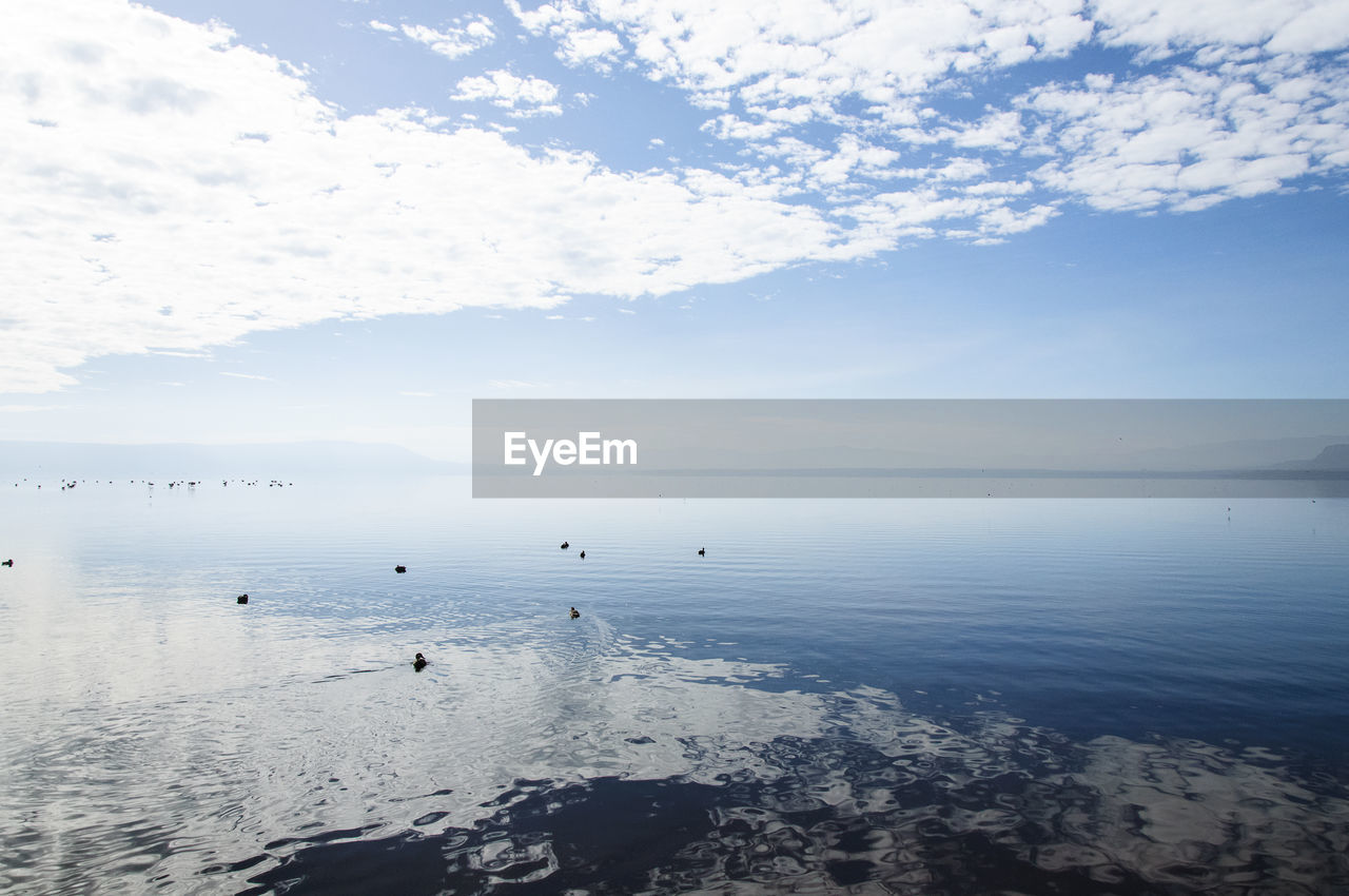water, sky, sea, beauty in nature, scenics, nature, tranquility, tranquil scene, cloud - sky, horizon over water, no people, outdoors, day, floating on water, bird