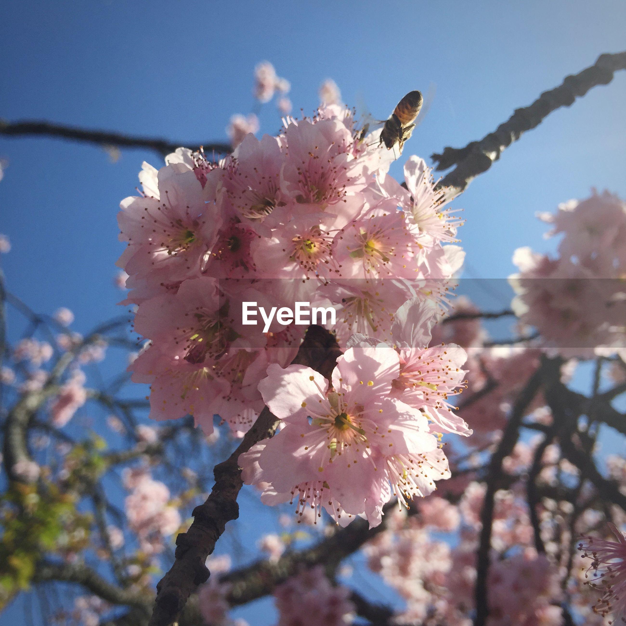 Pink blossom on branch