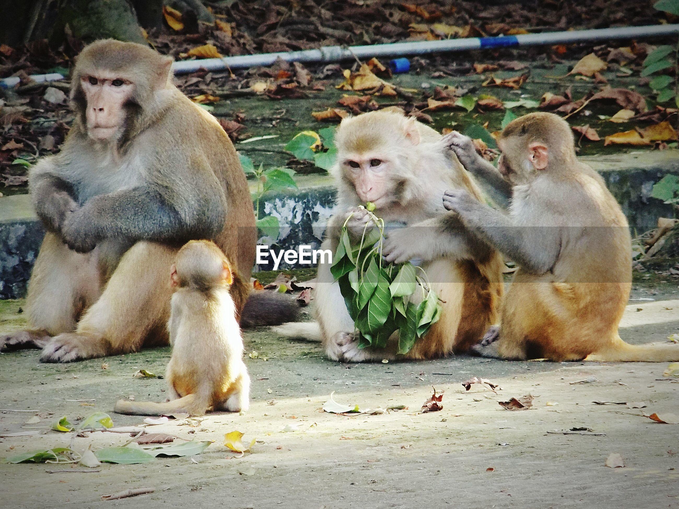 Monkey family sitting on sidewalk