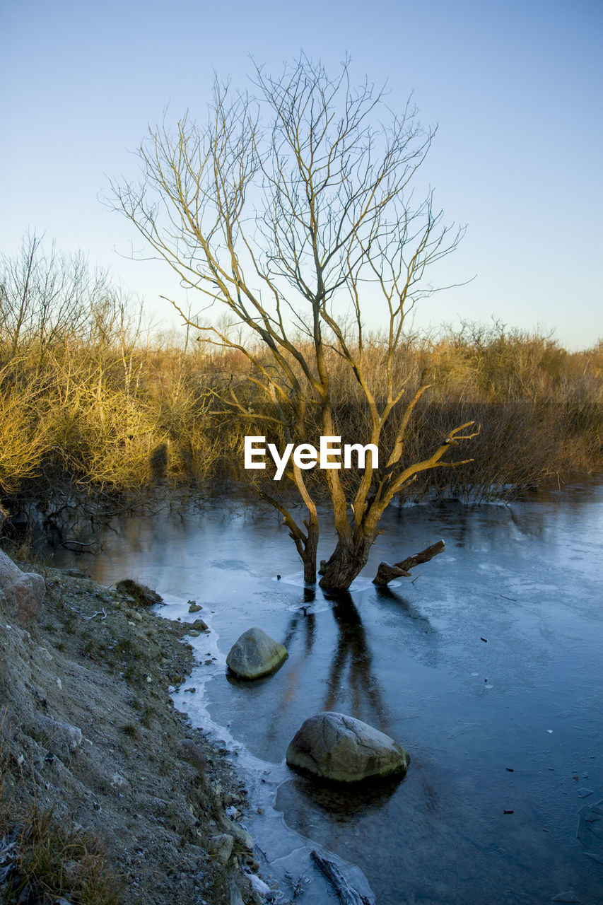 Bare Tree By River Against Clear Sky