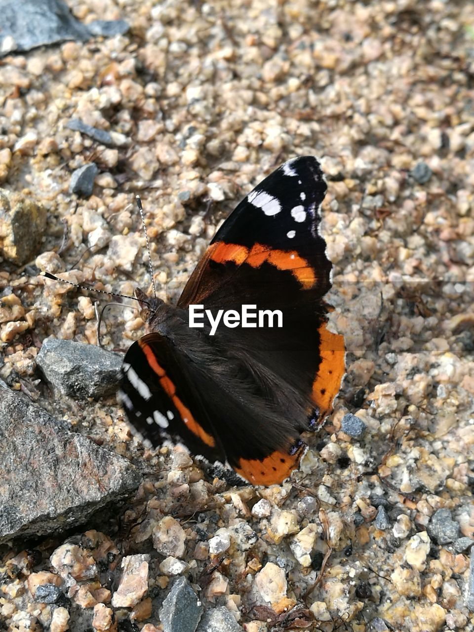 butterfly - insect, one animal, animals in the wild, animal themes, insect, animal wing, butterfly, animal wildlife, nature, outdoors, no people, day, close-up, animal markings, full length, fragility, beauty in nature, perching