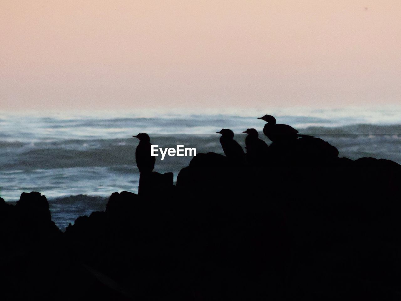 silhouette, sea, nature, beach, sunset, horizon over water, beauty in nature, rock - object, scenics, water, outdoors, leisure activity, sky, tranquility, vacations, tranquil scene, wave, togetherness, real people, men, day, bird, perching, mammal, people