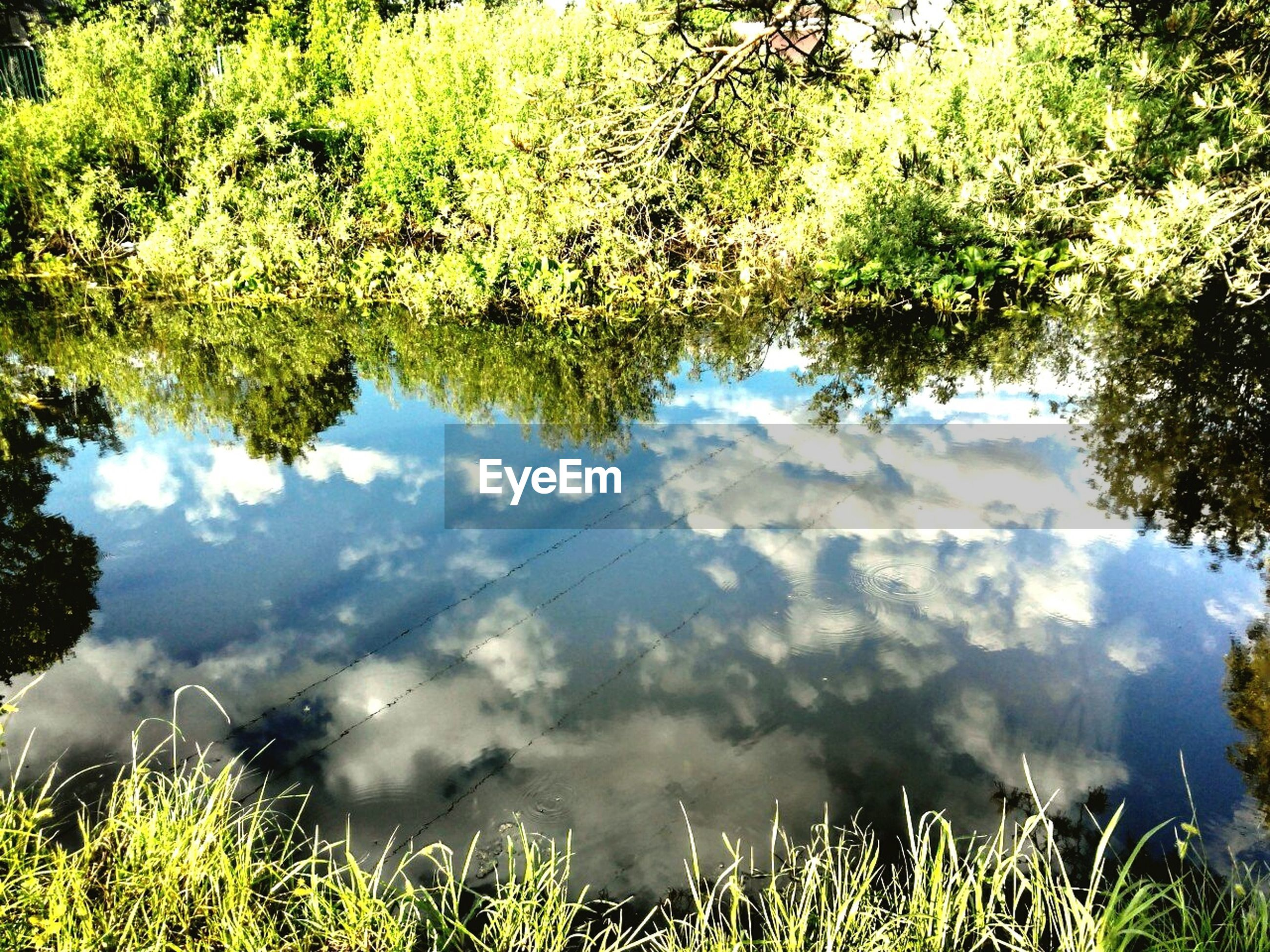 tranquility, water, tranquil scene, grass, lake, reflection, scenics, sky, beauty in nature, tree, nature, growth, green color, plant, cloud - sky, idyllic, landscape, day, outdoors, cloud