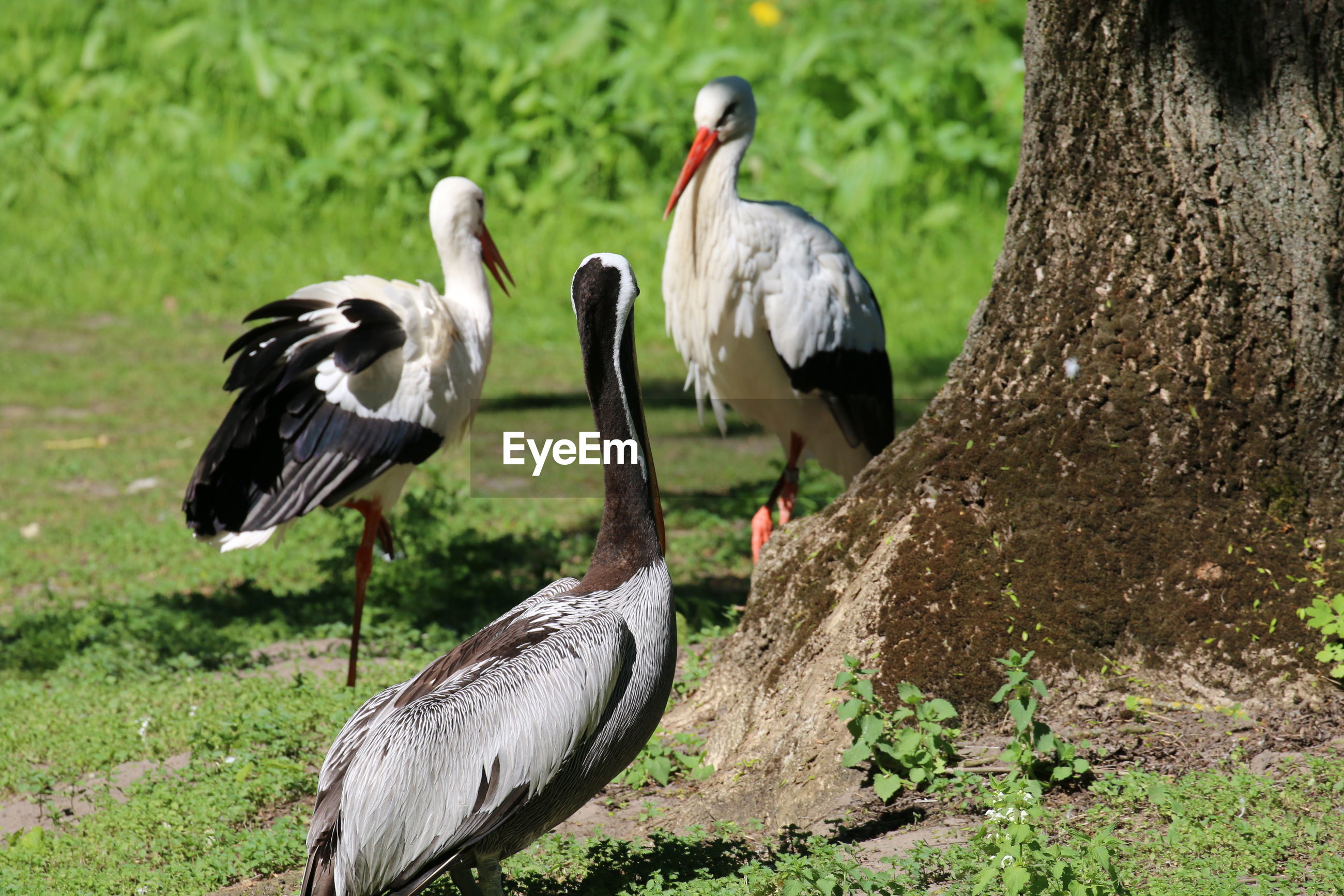 Flock of birds perching on grass