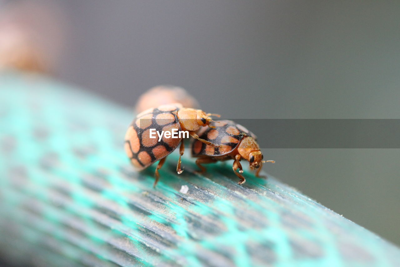 animal themes, animal, animal wildlife, animals in the wild, selective focus, one animal, invertebrate, close-up, insect, no people, nature, day, zoology, outdoors, arthropod, beetle, jumping spider, plant part, turquoise colored, animal eye, marine