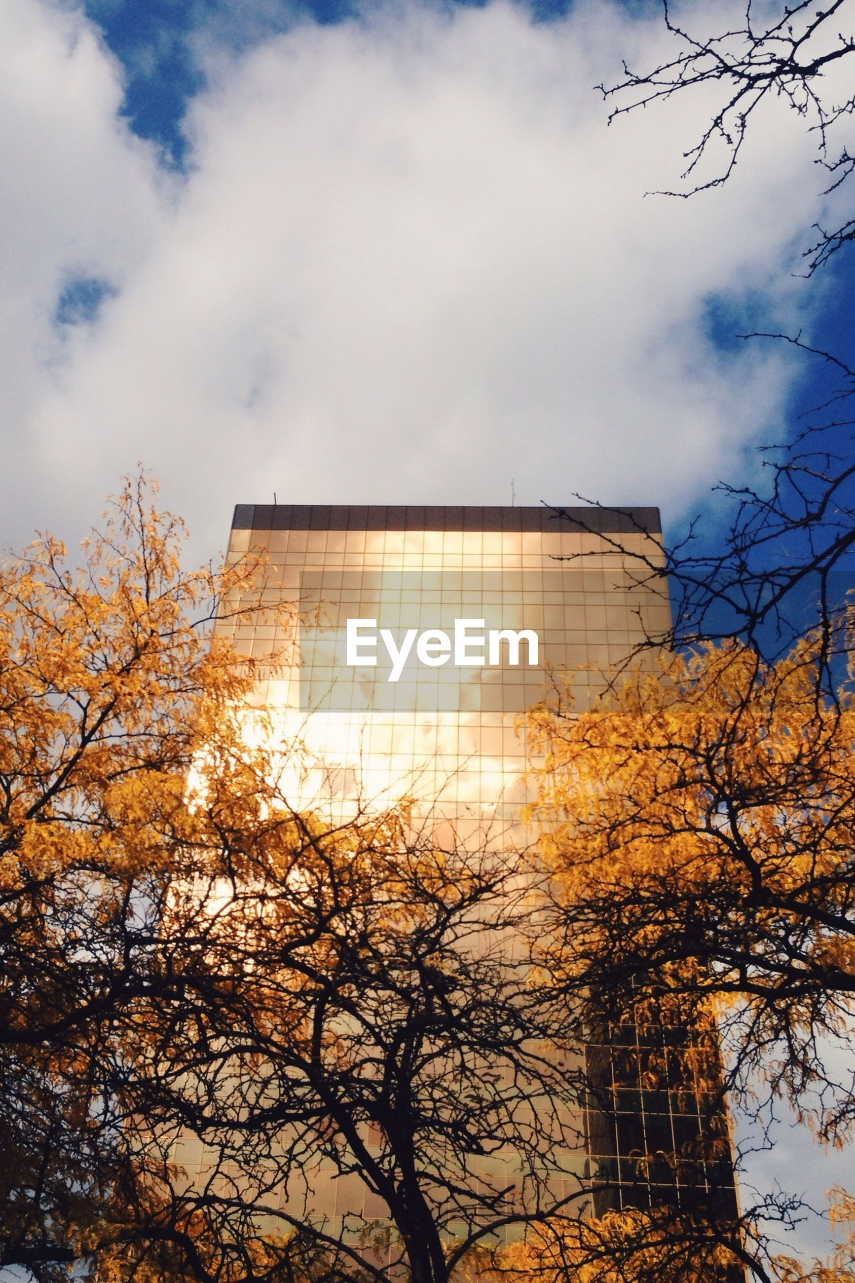Low angle view of autumn trees and office building against cloudy sky