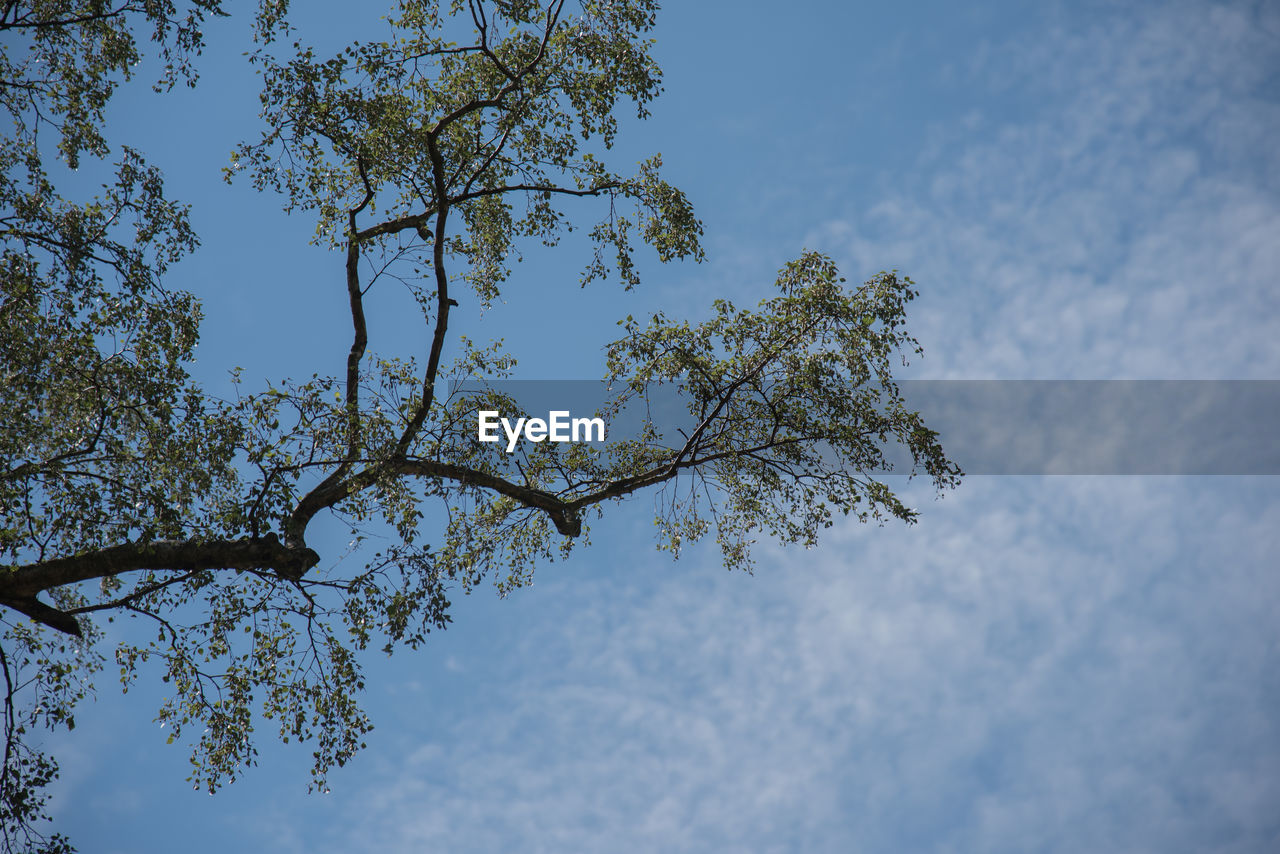 tree, low angle view, nature, beauty in nature, sky, branch, growth, day, no people, outdoors, scenics, freshness