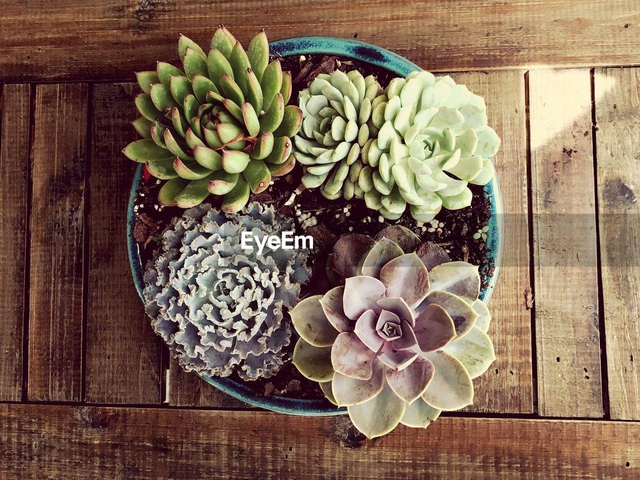 High angle view of cactus on table