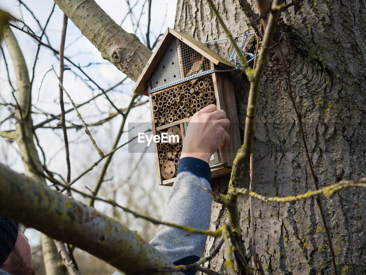 Person opening insect hotel on tree trunk