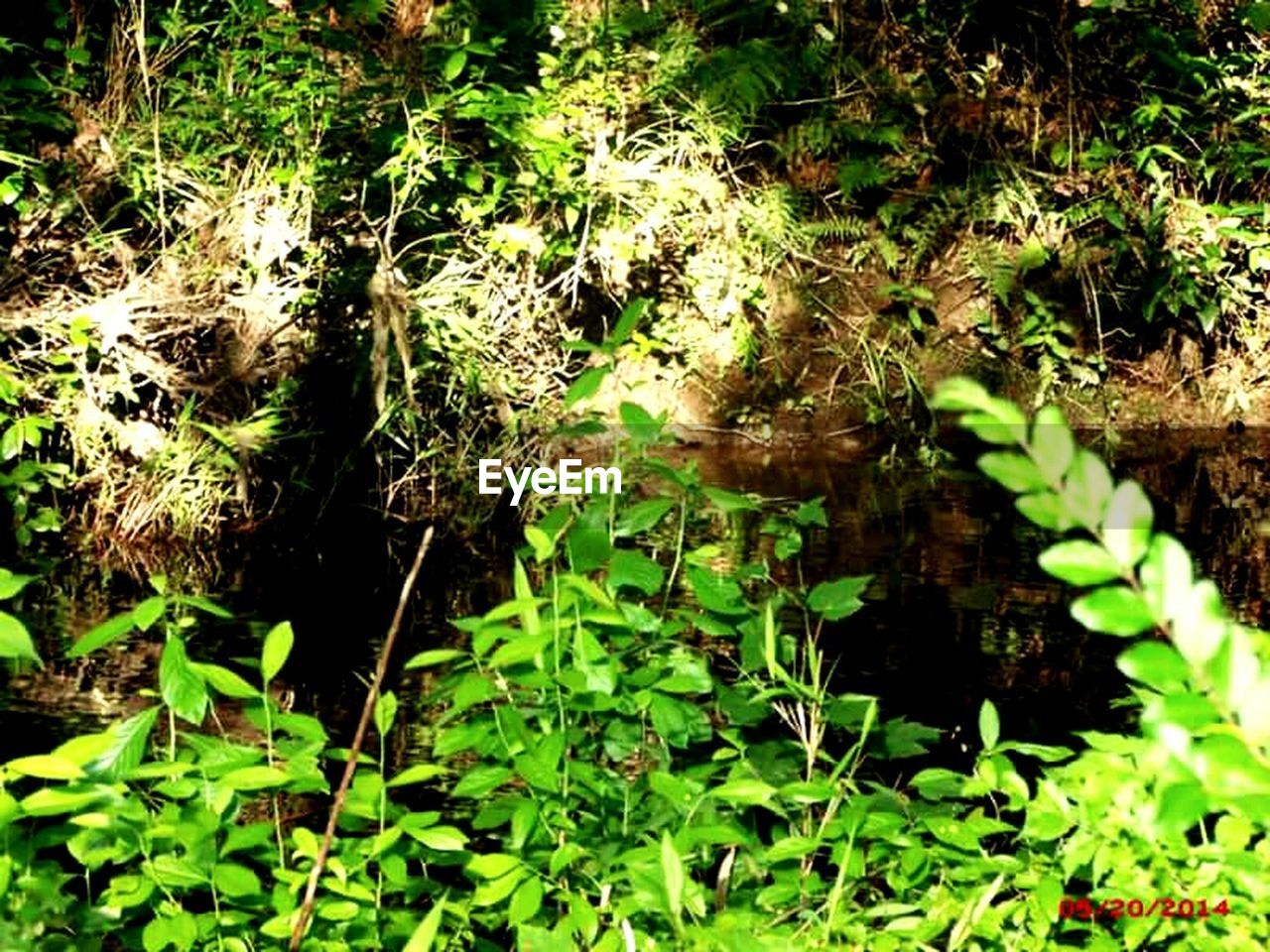 nature, growth, plant, forest, outdoors, no people, water, day, beauty in nature, foliage, thick