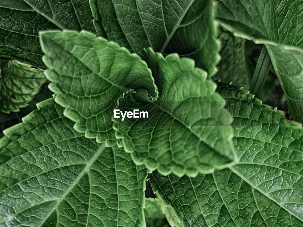 leaf, green color, plant, growth, nature, full frame, beauty in nature, backgrounds, close-up, freshness, outdoors, day, no people, food