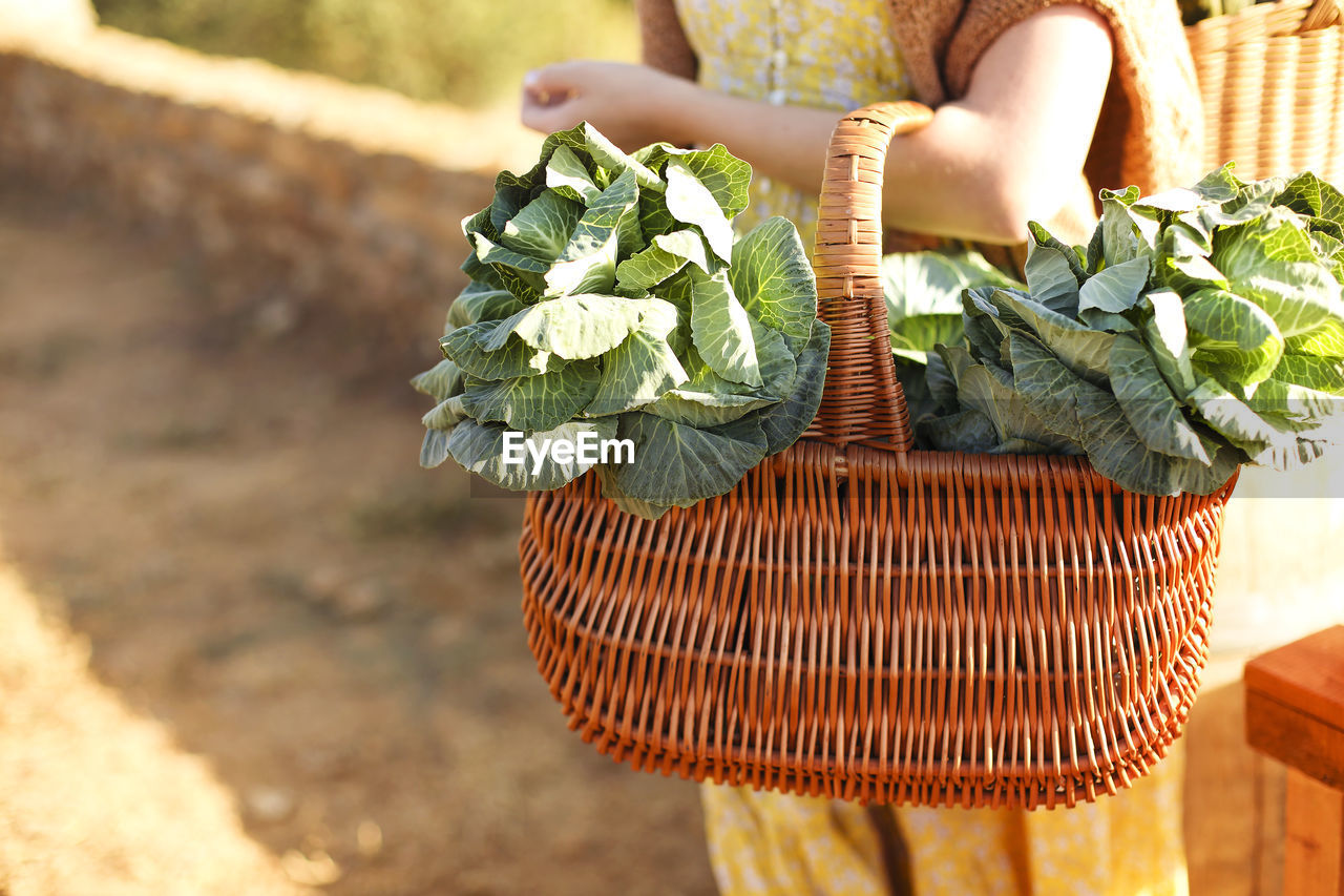 MIDSECTION OF MAN HOLDING BASKET IN WICKER WHILE STANDING BY PLANTS