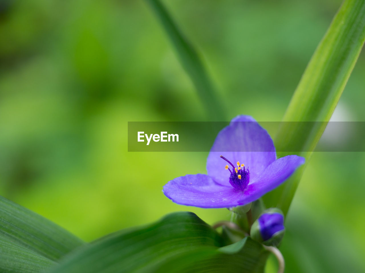 flowering plant, flower, plant, freshness, vulnerability, fragility, petal, beauty in nature, growth, flower head, inflorescence, close-up, purple, nature, green color, day, one animal, focus on foreground, leaf, selective focus, no people, pollen, pollination