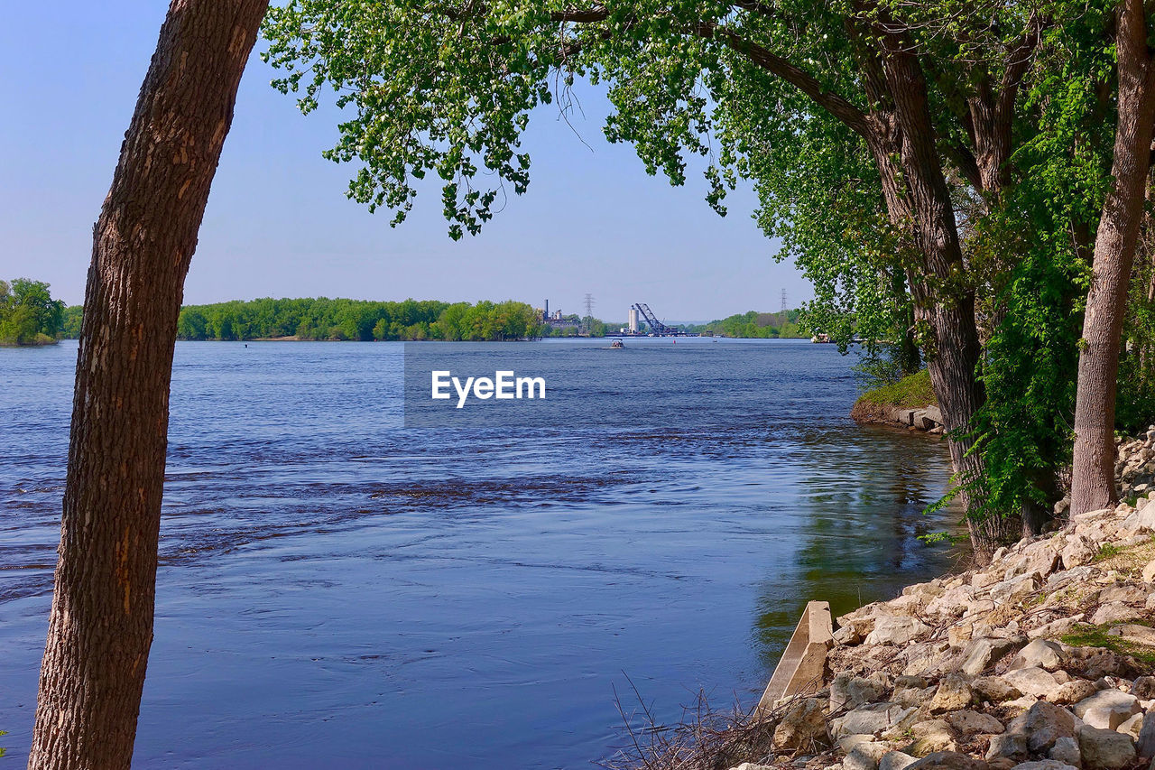 tree, plant, water, tranquility, scenics - nature, beauty in nature, nature, tranquil scene, sky, no people, day, growth, trunk, tree trunk, land, river, outdoors, non-urban scene, beach