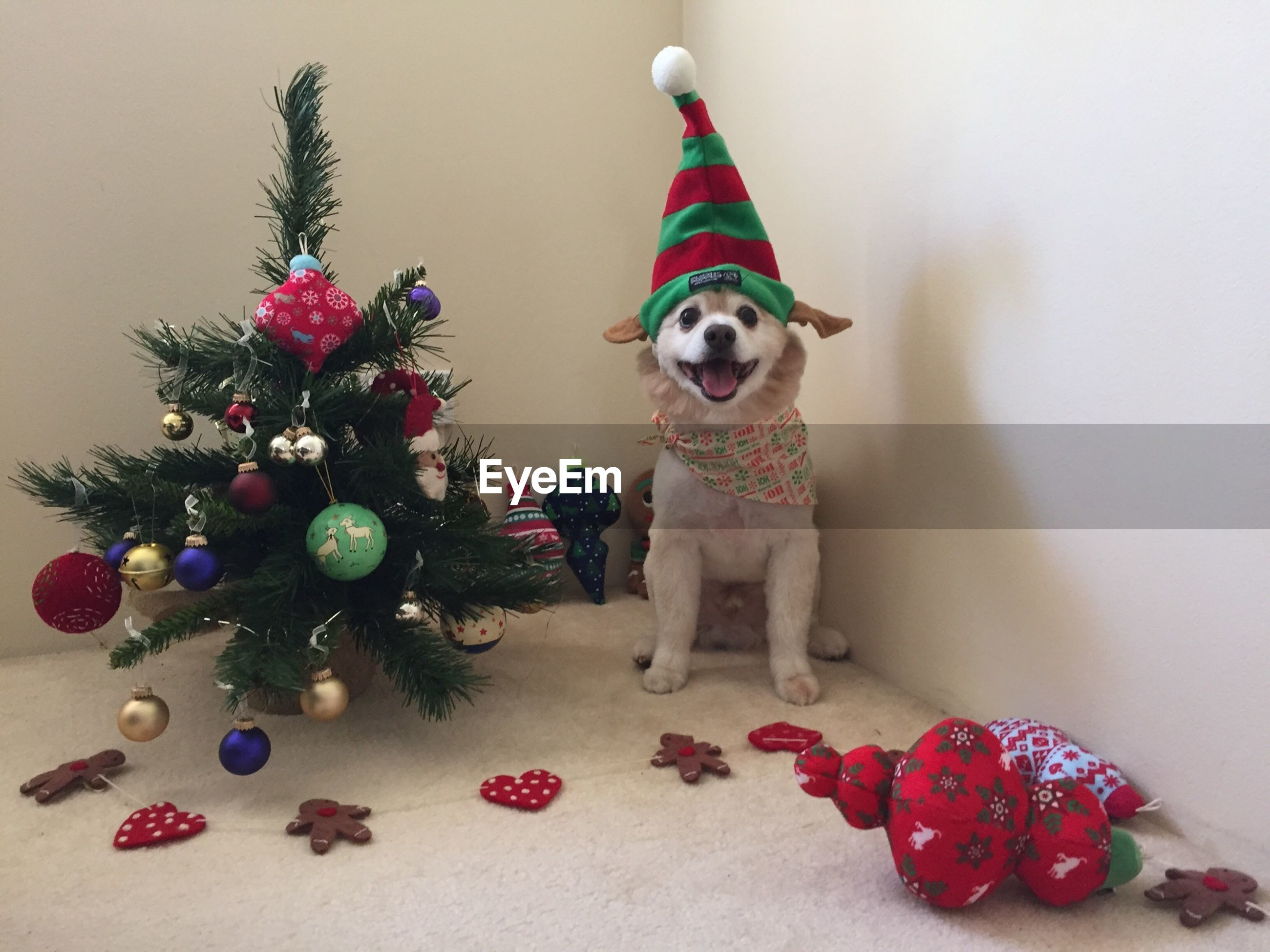 Portrait of dog with santa hat and christmas tree at home