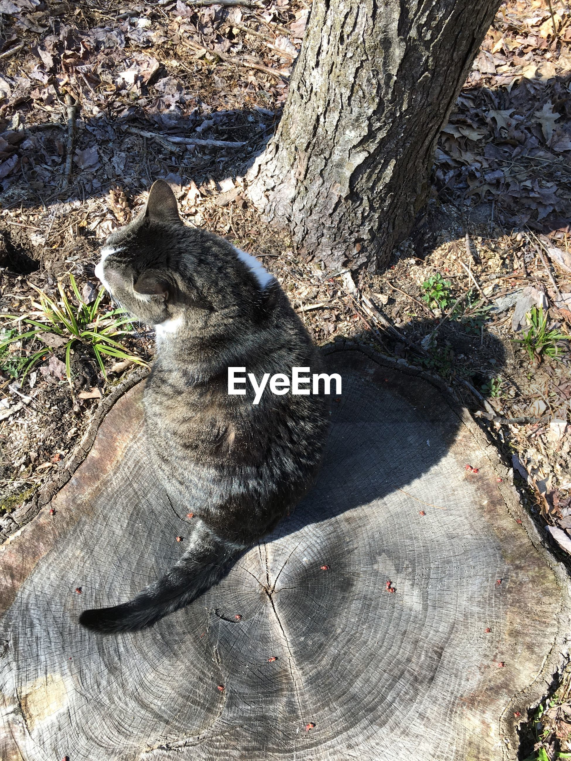 High angle view of domestic cat sitting on tree stump