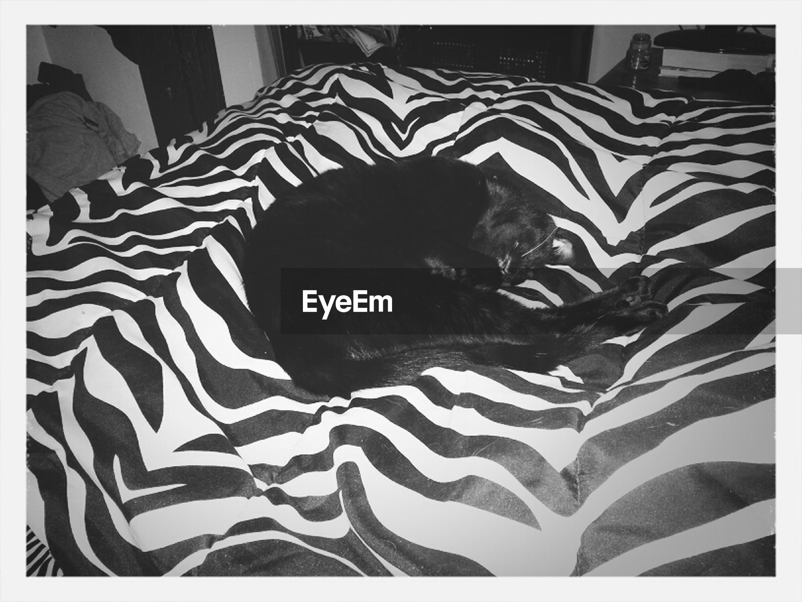 indoors, transfer print, bed, auto post production filter, relaxation, animal themes, one animal, resting, sleeping, sofa, pets, fabric, pattern, lying down, domestic animals, textile, no people, pillow, comfortable, high angle view