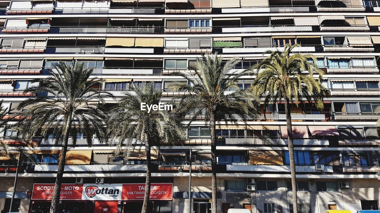 palm tree, architecture, building exterior, city, tree, outdoors, day, growth, built structure, no people