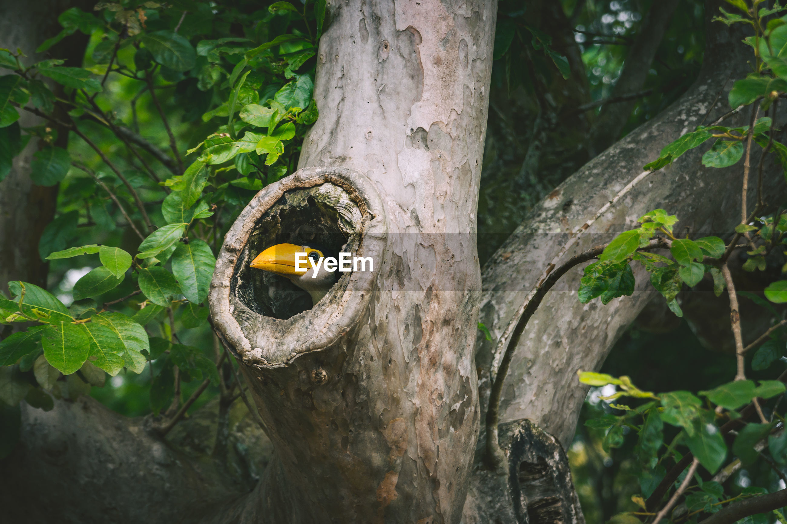 Close-up of bird perching in tree trunk