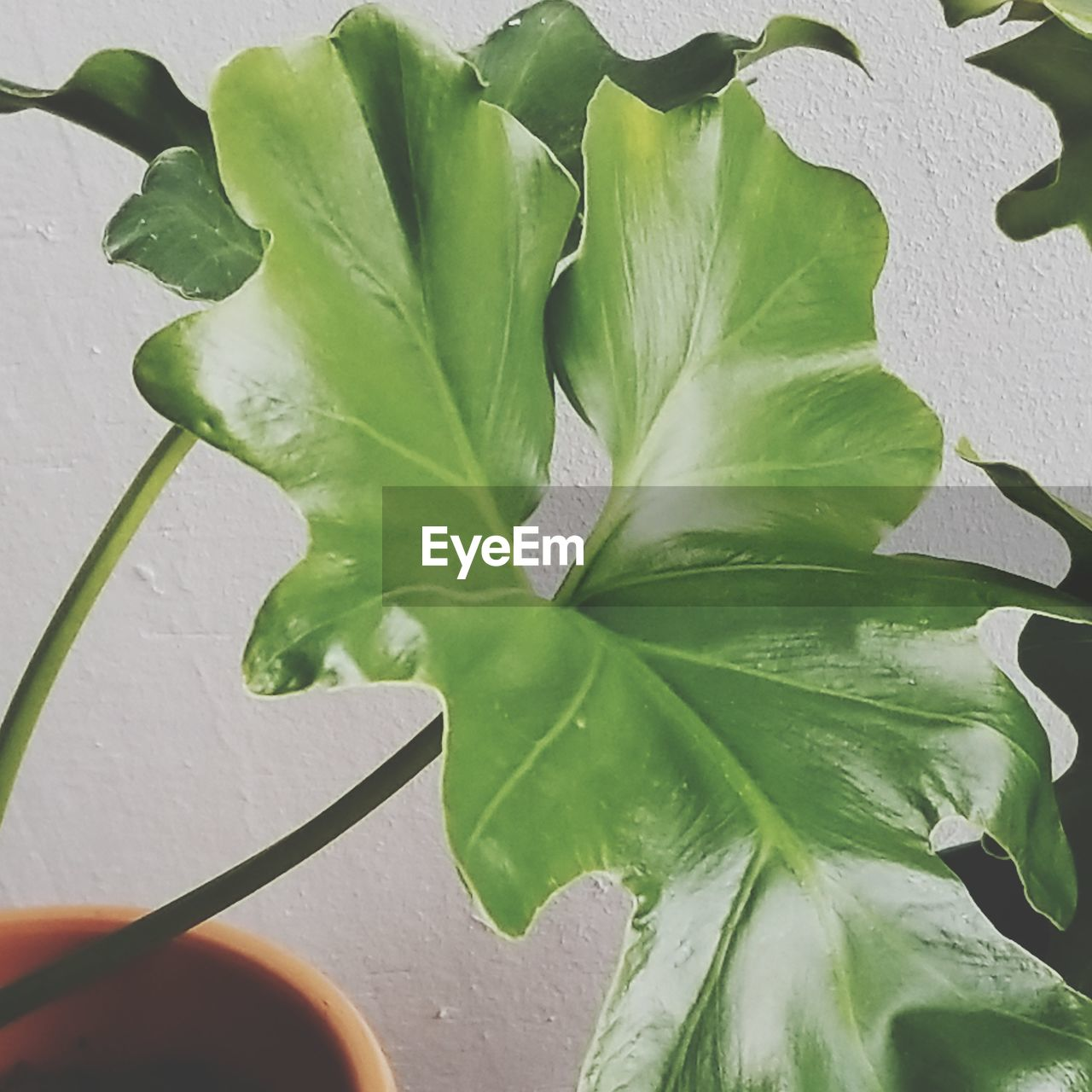plant part, leaf, green color, plant, growth, close-up, nature, beauty in nature, leaf vein, outdoors, day, no people, vegetable, freshness, food and drink, food, high angle view, plant stem, leaves