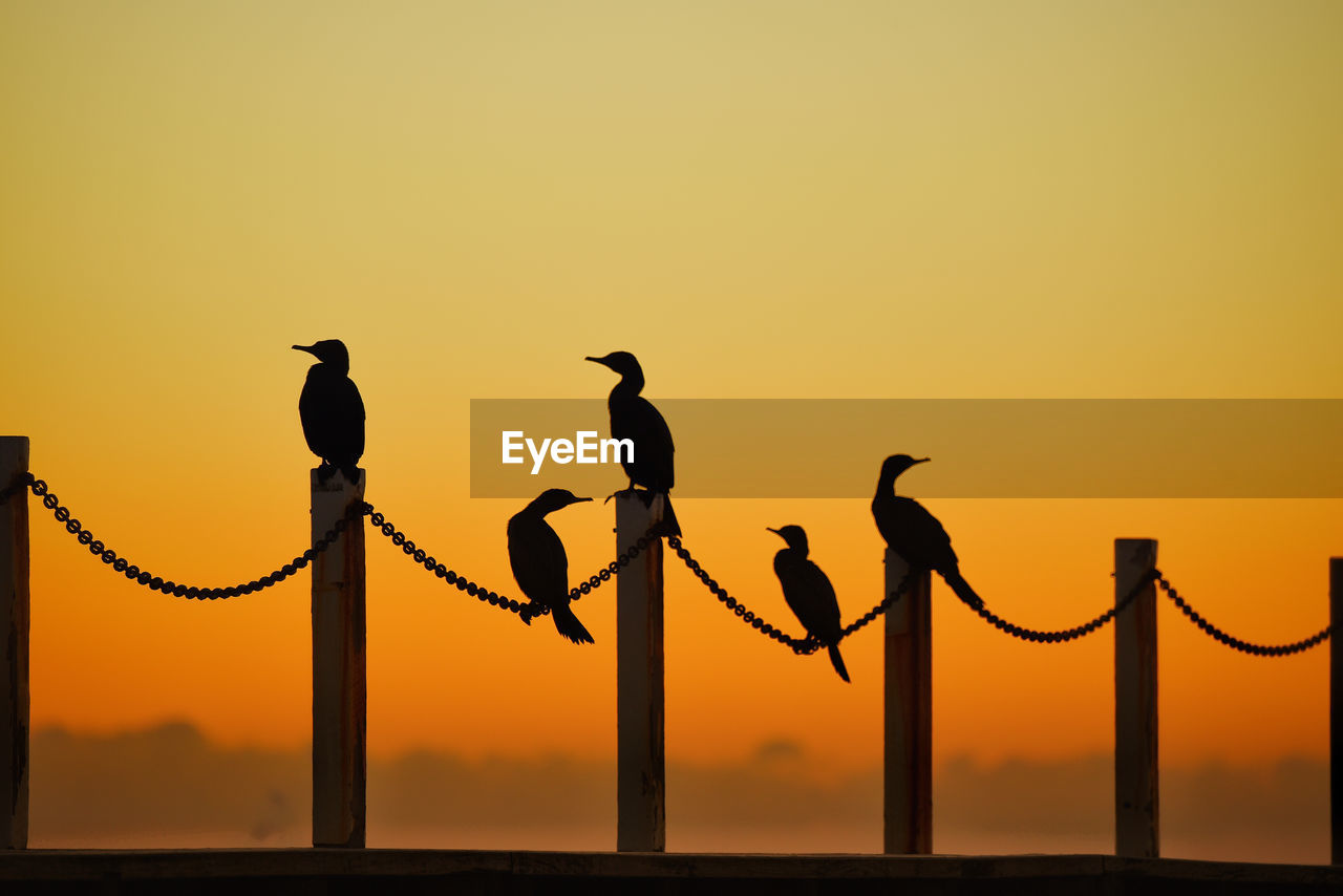 sunset, sky, vertebrate, animal themes, animal, animal wildlife, group of animals, bird, orange color, animals in the wild, silhouette, no people, nature, perching, clear sky, copy space, beauty in nature, outdoors, five animals, scenics - nature