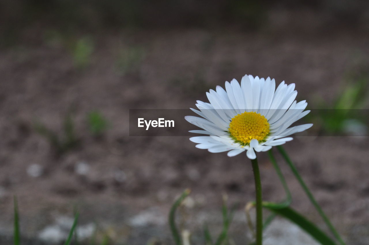 flower, nature, petal, fragility, freshness, flower head, beauty in nature, growth, plant, blooming, field, no people, close-up, outdoors, day
