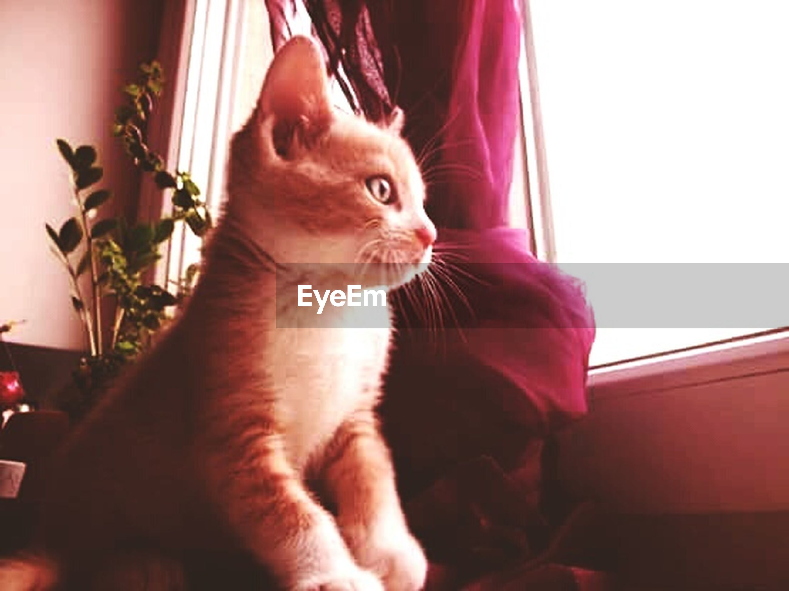domestic animals, animal themes, pets, one animal, domestic cat, mammal, cat, feline, indoors, low angle view, whisker, close-up, sitting, home interior, looking away, animal head, no people, day, zoology, red