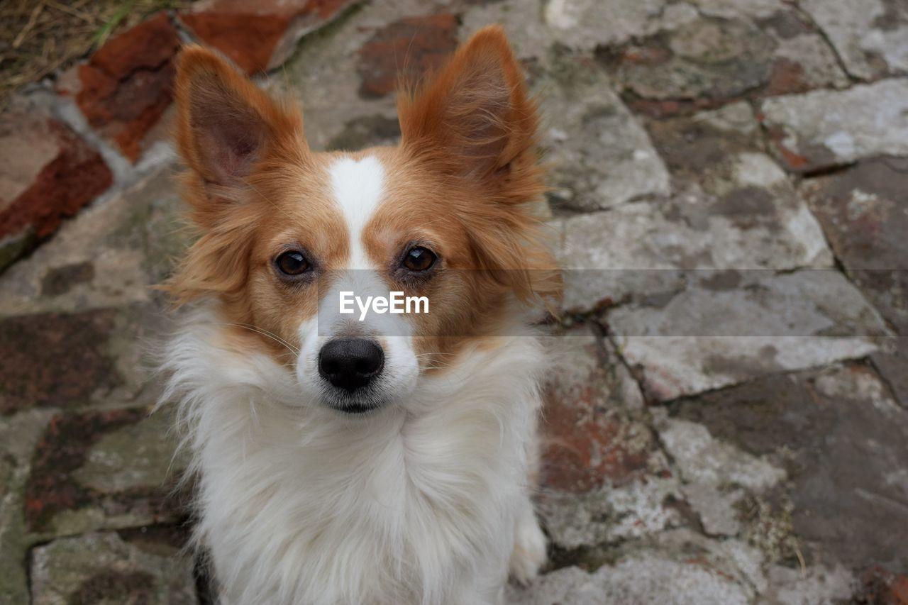 HIGH ANGLE PORTRAIT OF DOG ON WALL