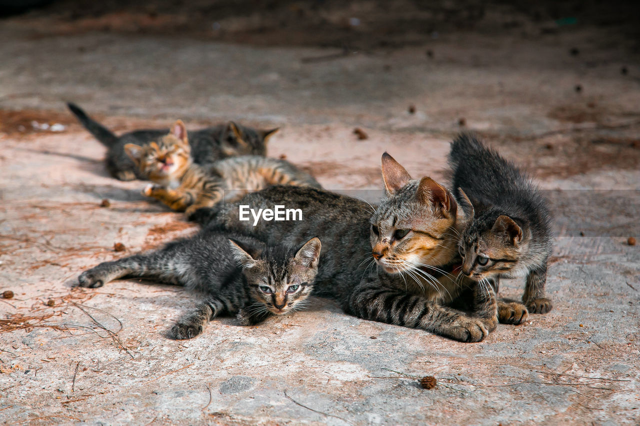 animal themes, animal, mammal, cat, feline, group of animals, domestic cat, young animal, vertebrate, kitten, relaxation, no people, pets, domestic animals, domestic, lying down, animal wildlife, togetherness, day, animal family, whisker